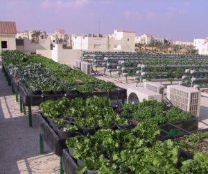 رئيس التعاون المصري الألماني للتنمية: نحاول دمج حضارة الزراعة الحيوية بين البلدين
