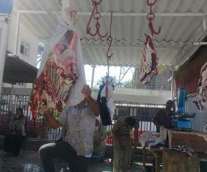 رئيس الخدمات البيطرية: مشروع البتلو ساهم في عدم ذبح صغار الماشية