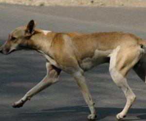 """""""هم يبكي"""".. 65 مواطن يفارقون الحياة في مصر  بسبب """"عضة كلب"""""""