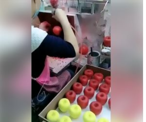 رش التفاح البلدي بمادة غريبة لتحويله إلى أمريكاني ( فيديو )