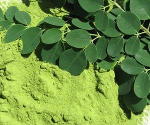 فوائد المورينجا ..يستخدم زيتها للطهي وأوراقها لنقص التغذية والبذور تنقى الماء