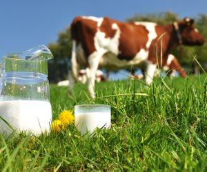 حليب الأبقار التي تعيش في المرعى الطبيعي العضوي يحمي القلب