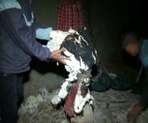 القرية المسكونة بالجن: اشتعال النيران في منازل الأبعادية.. وعلاء حسانين يفسر للأهالي: ضربتوا كلب أو قطة