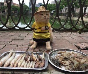 """حكاية قط فيتنام الشقي.. """"تشو"""" يساعد صاحبه في بيع السمك ولا يأكله"""