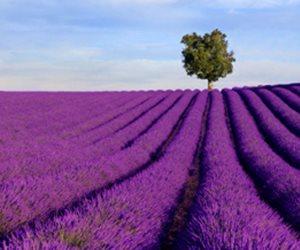 «البابونج والنعناع واللافندر».. نباتات يمكن زراعتها في المنزل بسهولة