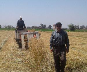 صوامع وشون الدقهلية تستقبل 20% من محصول القمح بإجمالي 5142 طنا