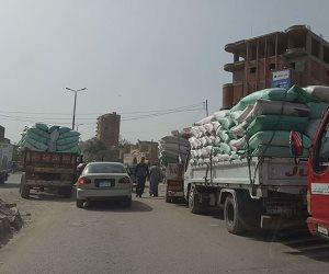 توريد 116ألف طن قمح للشون والصوامع وإزالة 360 مشتل أرز مخالف بالغربية