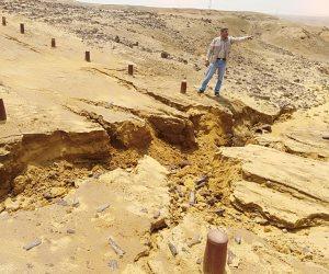 «البيئة» تشكل لجنة لتقدير خسائر الغابة المتحجرة من الأمطار