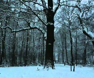 أغاني الطقس.. رجعت الشتوية (فيديو)