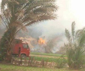 السيطرة على حرائق جديدة بالأشجار فى قرية عرب السلطان بأبو قرقاص فى المنيا