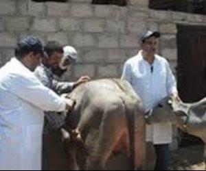 تحصين 267 ألف رأس ماشية وأغنام ضد الحمى القلاعية و«الوادي المتصدع» بالدقهلية
