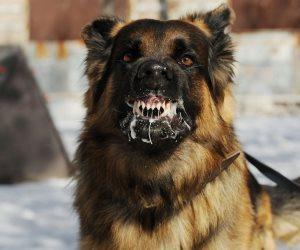 أمن القليوبية يضبط المتهمين بترويع طفل من ذوي الإعاقة بكلب شرس