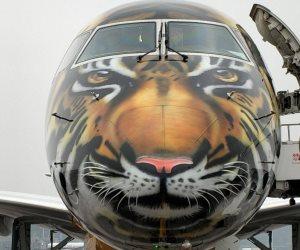 على كل لون يا طائرات.. من وجه النمر إلى الحوت الأبيض (صور)