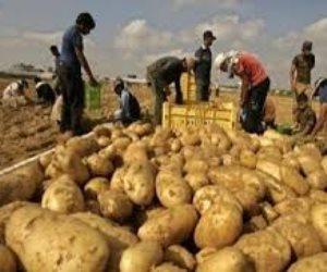 حزب الأغلبية البرلمانية يكشف أسباب غلاء البطاطس والطماطم.. ويقدم للحكومة مقترحات الحل