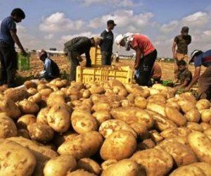 بعد الوصول لكندا والمغرب.. الموالح تتربع على عرش الصادرات الزراعية المصرية بـ45% ( صور )