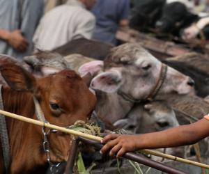طوارئ بالمنافذ الحدودية لاستقبال الأضاحي: حملات بالأسواق.. وشوادر للحوم