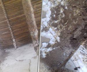 تعرف على خطة الحكومة لمواجهة طوائف «النمل الأبيض» في 15 محافظة
