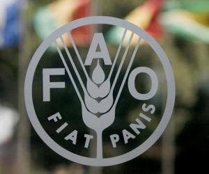 تعرف على أبرز مشروعات منظمة الأغذية والزراعة فى مصر