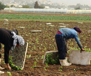 ائتلاف الأغلبية في البرلمان يهاجم سياسات المنظومة الزراعية.. ماذا قال؟