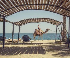 بالأرقام.. تعرف على عدد المصريين العاملين بقطاع السياحة