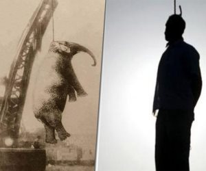 من الشنق إلى الدهس بالفيل.. حكايات القصاص وضمانات تنفيذ «عشماوى» لأحكام الإعدام