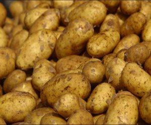 ضبط 1400 طن مخزنة في الغربية وحدها.. هل تقضي الحملات الرقابية على أزمة البطاطس؟
