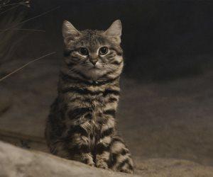 محكمة تقضي بالسجن على صاحب متجر بسبب «خدشة قطة»