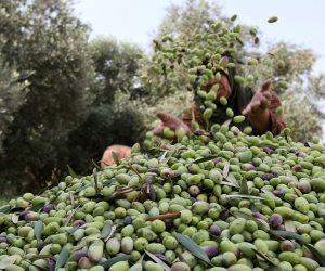 في 10 نقاط.. تعرف على إجراءات «الزراعة» لاستخلاص وإنتاج زيوت الطعام