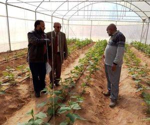 مدرسة زراعية تنجح في تحقيق 2 مليون جنيه مبيعات منتجات مشروع الصوب (صور)
