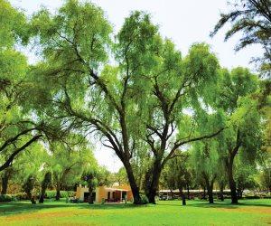 لامتصاص الكربون وضخ الأكسجين..البيئة المصرية تأمل فى هيئة وطنية للغابات والتشجير