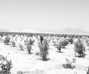 تفاصيل استصلاح وزراعة 400 ألف فدان بسهل الطينة وبئر العبد.. وإنشاء 5 قرى للخريجين