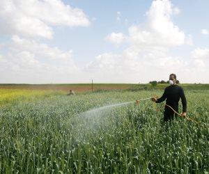 موسم الجراد الصحراوي.. مراحل تطور «الحشرة المؤذية» تهدد الزراعات (صور)