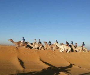 انطلاق مهرجان «الهجن» الثامن عشر بالإسماعيلية بمشاركة 10دول عربية وأفريقية