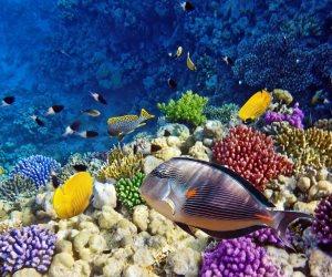 CNN تروج للسياحة في مصر: هناك أفضل الوجهات بالعالم للغوص والرياضات البحرية