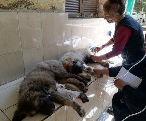 مملكة الكلاب.. هنا تقص أظافرها بـ20 جنيها وتظيف الأذن بـ50 (صور)
