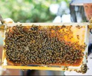 81 مليون خلية على مستوى العالم تنتج 1.6 مليون طن من العسل سنويا