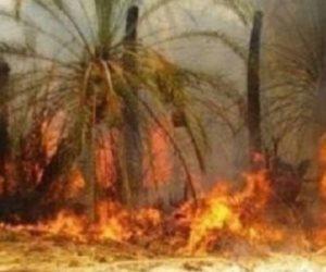 """من يشعل حرائق الجزائر؟.. """"تبون"""" يعلن الحداد الوطني وتضامن عربي مع البلد الشقيق"""