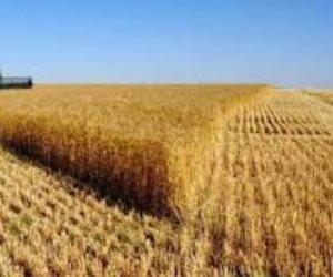 النيابة العامة تتحفظ على ملف إنشاء صومعة تخزين القمح المنهارة بالمنيا