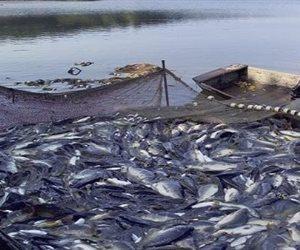 الثروة السمكية كنز يجري استعادته.. كيف خططت وزارة الزراعة لمضاعفة الانتاج؟