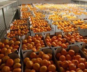 أسعار الخضروات والفاكهة اليوم الإثنين 9-12-2019.. اليوسفي يبدأ من 4 جنيهات للكيلو
