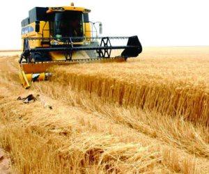 لماذا يتضاعف محصول القمح السورى في  الفترة المقبلة؟