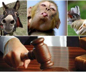 «حيوانات في قفص الاتهام».. أغرب الدعاوى القضائية بسجلات المحاكم