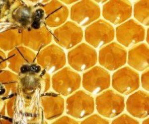 اعرف الفوائد الصحية للقاح النحل لعلاج الربو والحساسية