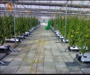 تبلغ 125 مليون كيلو متراً مربعاً..مساحة المحاصيل المُهندَسة وراثيّاً تسيطر على العالم