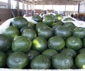 البطيخ يقوى المناعة ويحمى الجلد والبشرة