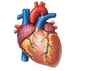 احذر: مضاعفات شريان القلب الموسع تسبب الوفاة
