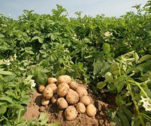 صادرات مصر الزراعية تتجاوز حاجز الـ 4.6 مليون طن خلال 8 أشهر