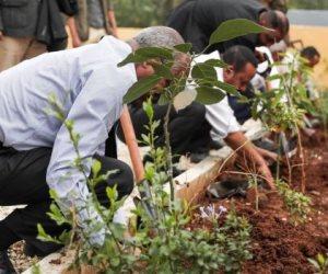 350 مليون شجرة تثير القلق في إثيوبيا.. اعرف التفاصيل