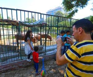 الفيلة «نعيمة» والشمبانزي «لوزة» يخطفان قلوب زوار حديقة الحيوان بالجيزة (صور)