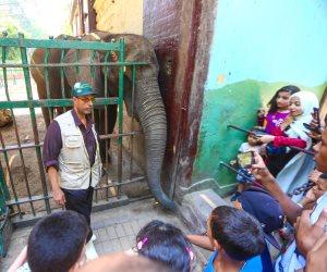 استقبلت 40 ألف زائر  في أول يوم للعيد.. توافد المواطنون مستمر على حديقة الحيوان (صور)